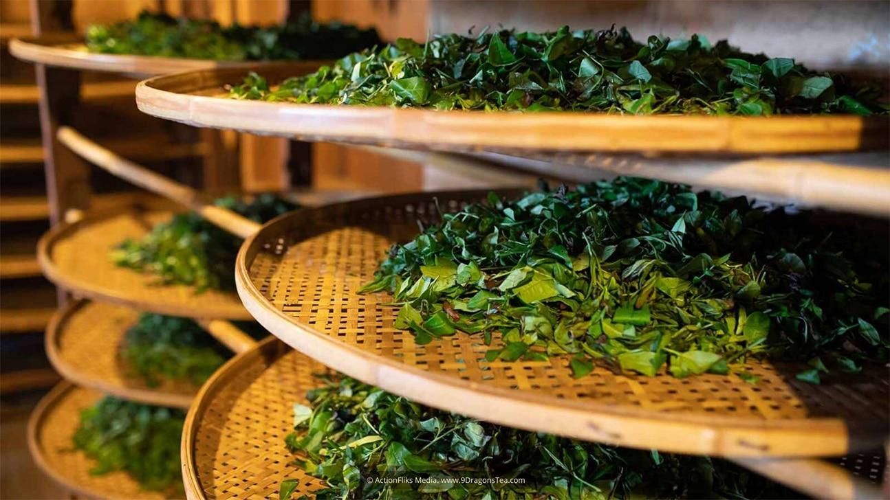 Traditional tea making green tea leaves on bamboo trays