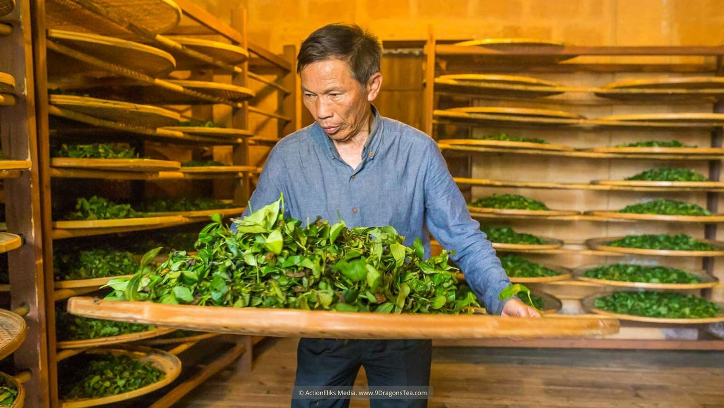 Wuyishan Culture traditional tea making tea master shaking green tea leaves in a room