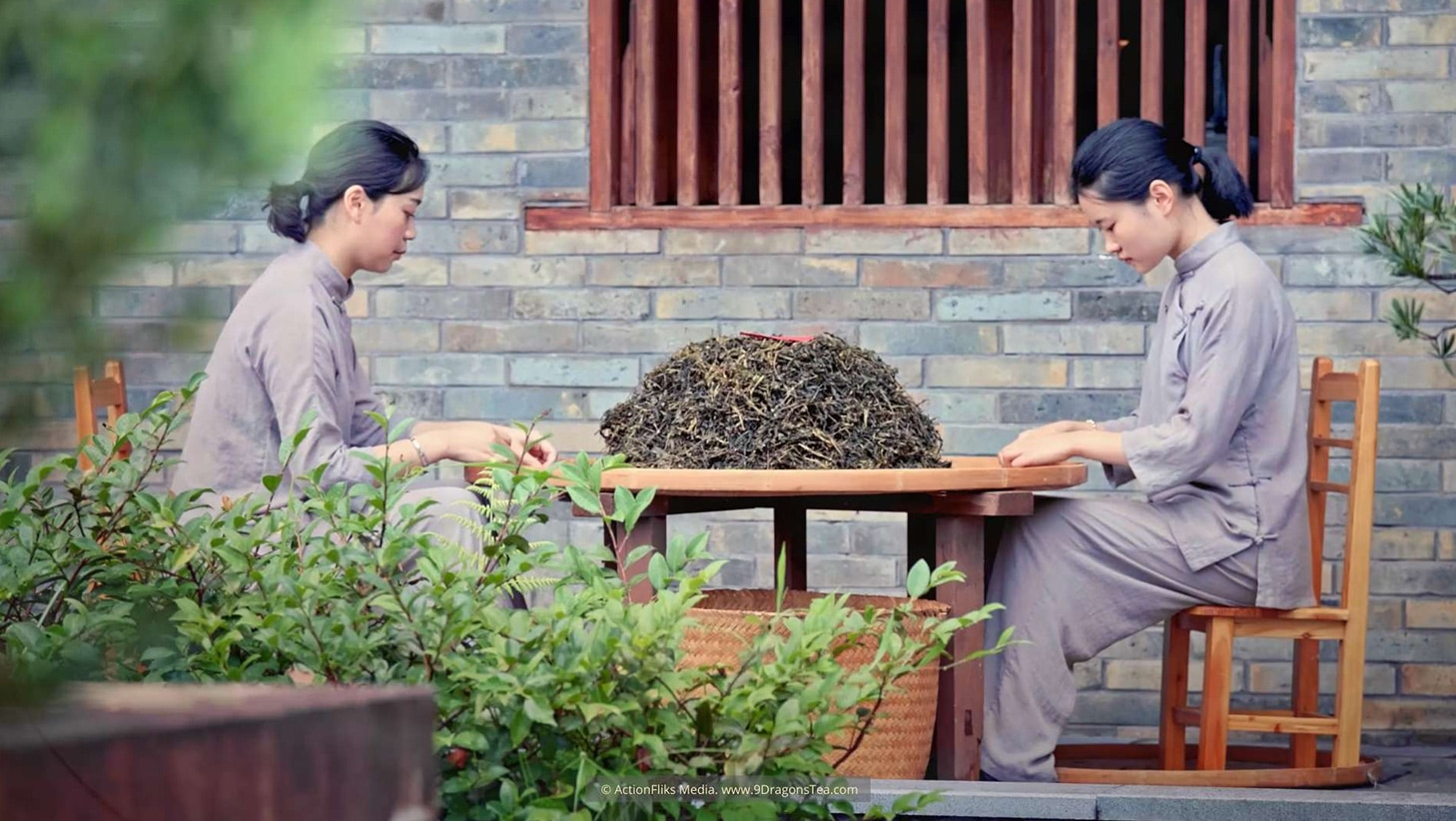 Wuyishan Culture traditional tea making young girls selecting dry loose leaf teas in courtyard