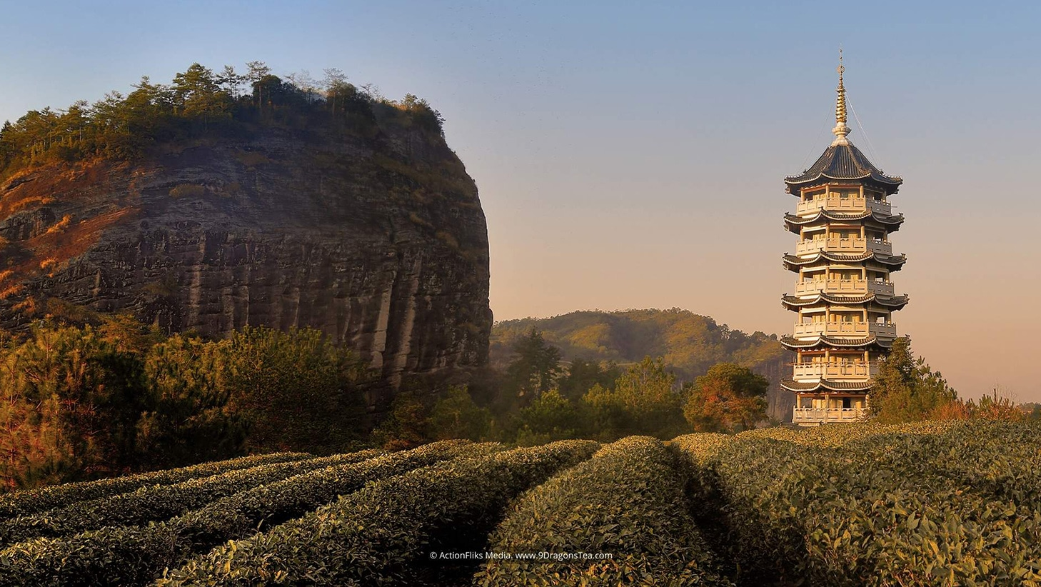 featured image wuyishan landscape tea field with mountain and buddhist pagoda