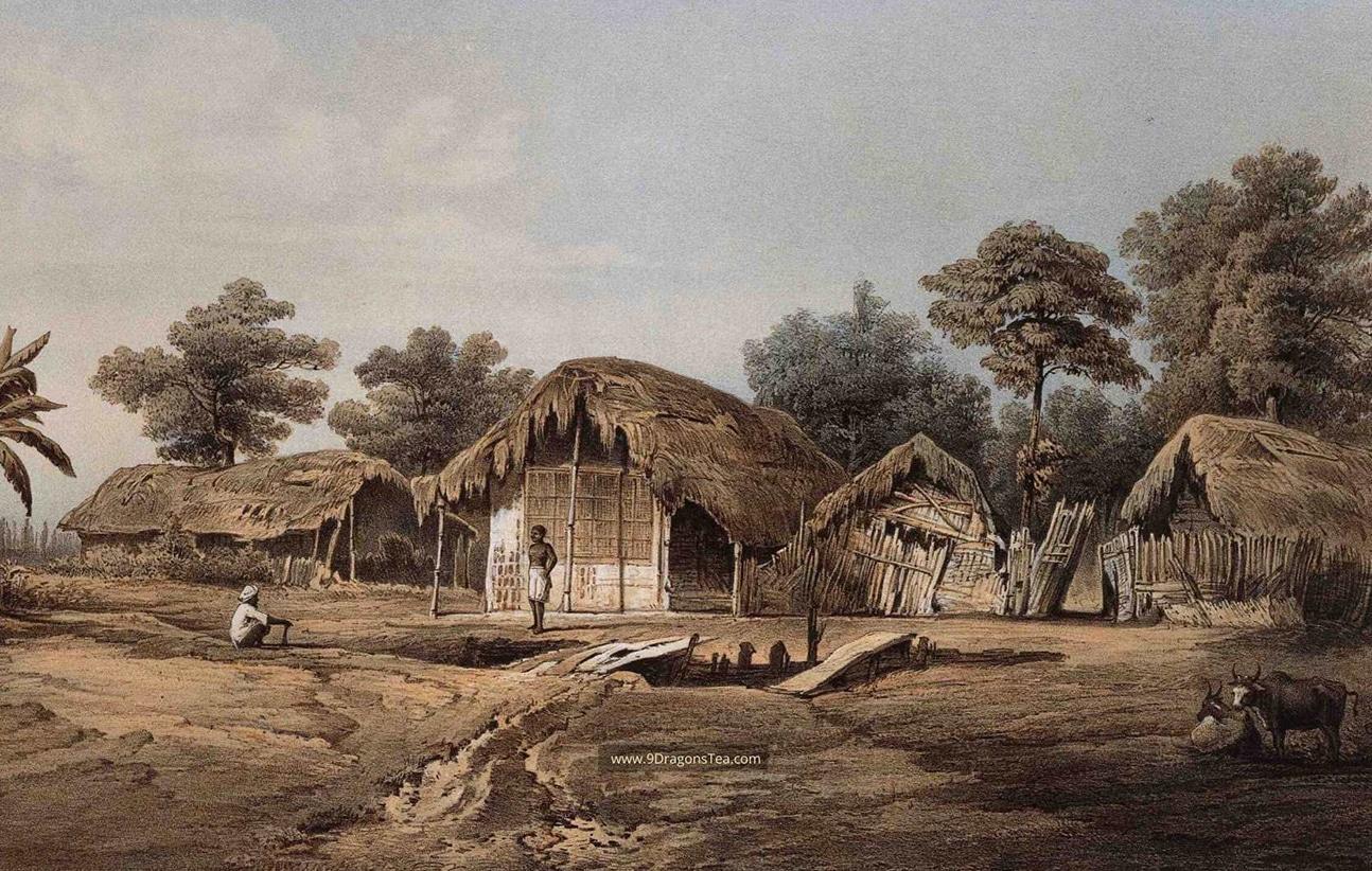how tea came to india village of mangeldai assam c1855