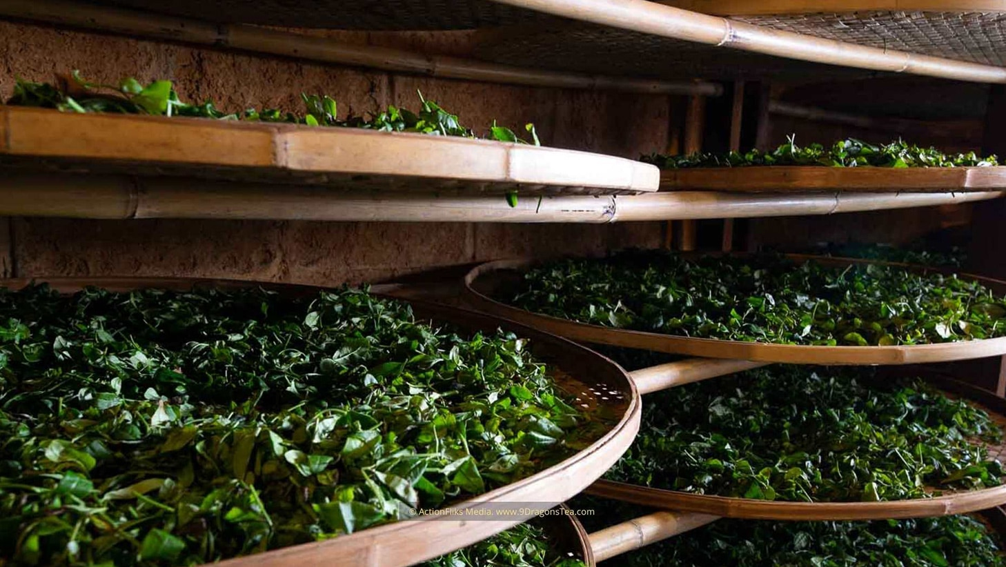 traditional chinese tea making drying tea leaves