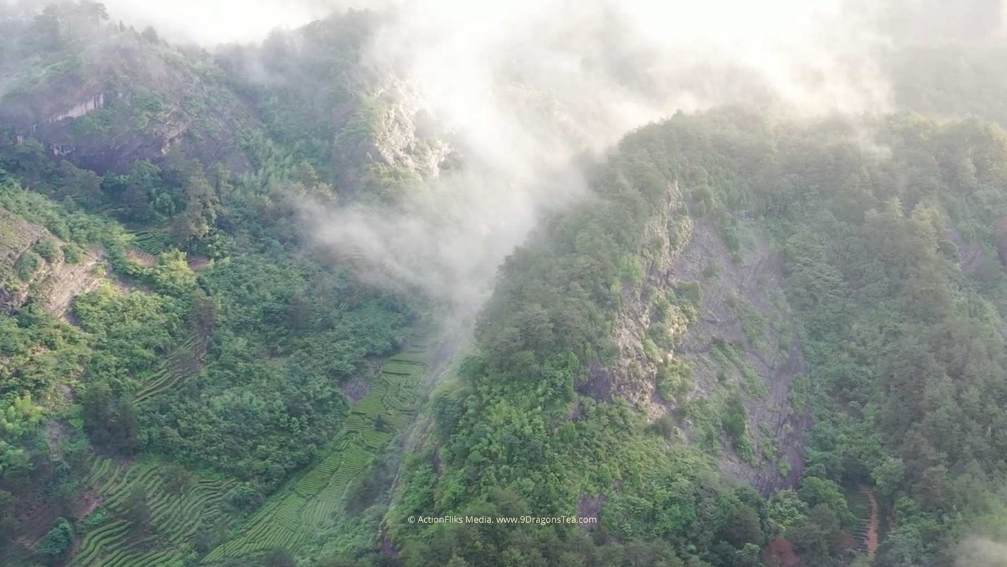 wuyishan landscape tea field rock terroir aerial view