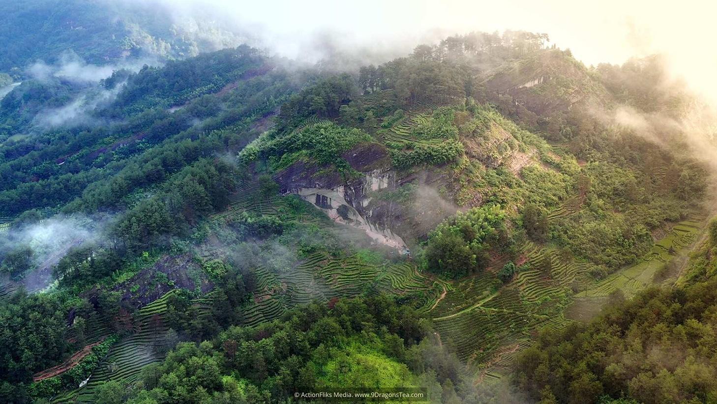 wuyishan landscape tea fields panoramic aerial view