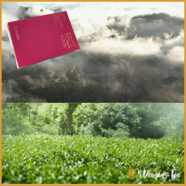 Oolong - Premium Rui Quay Cinnamon - by Jiaye - feature image