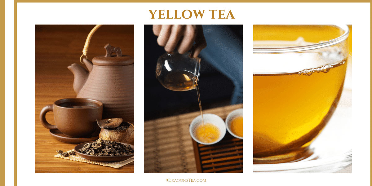 9 dragons tea-Yellow tea