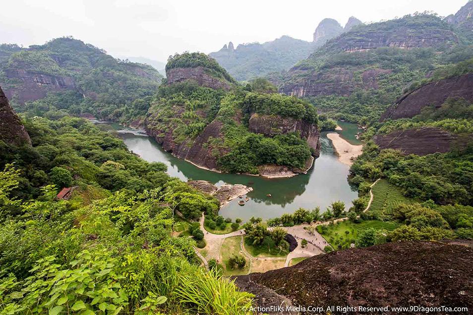ActionFliks 9 Dragons Tea Wuyi Signature Landscape Mountain River Tea Fields Top View
