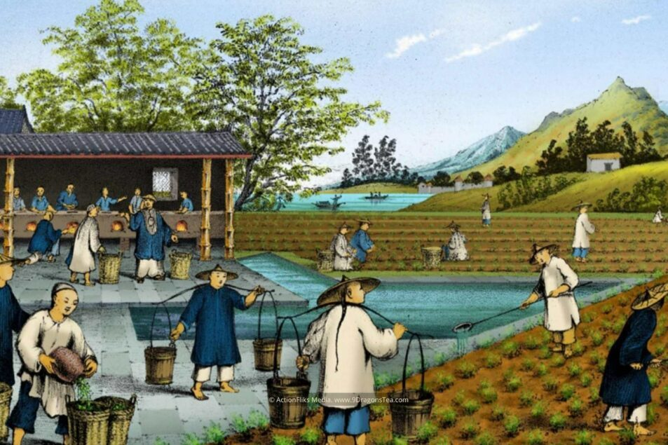 featured image historical painting traditional chinese tea making tea trade tea cultivation