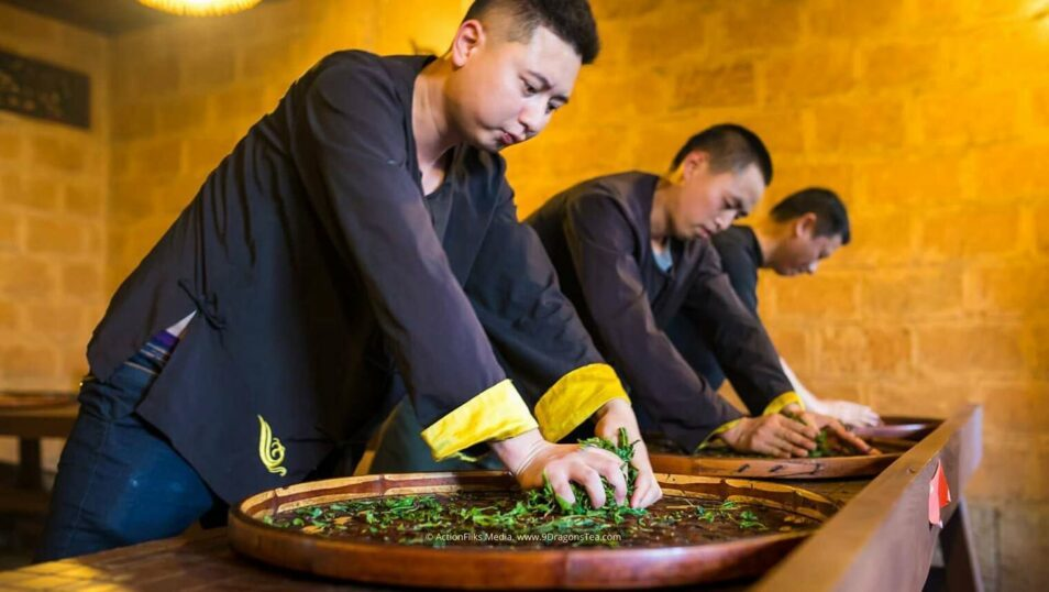 traditional chinese tea making tea makers rolling tea leaves