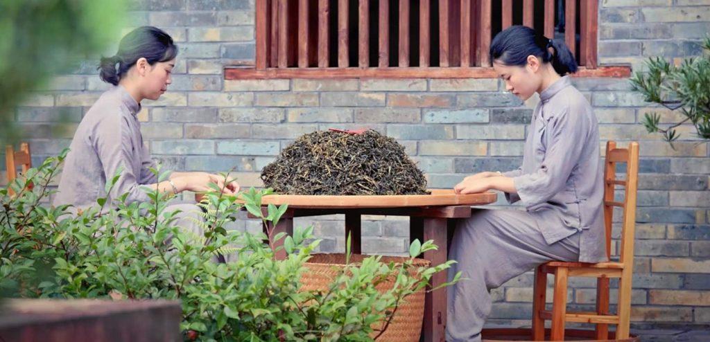 traditional chinese tea making wuyi oolong tea girls picking dry loose tea leaves in courtyard