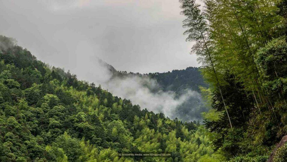wuyishan landscape nature preserve lapsang souchong black tea birthplace